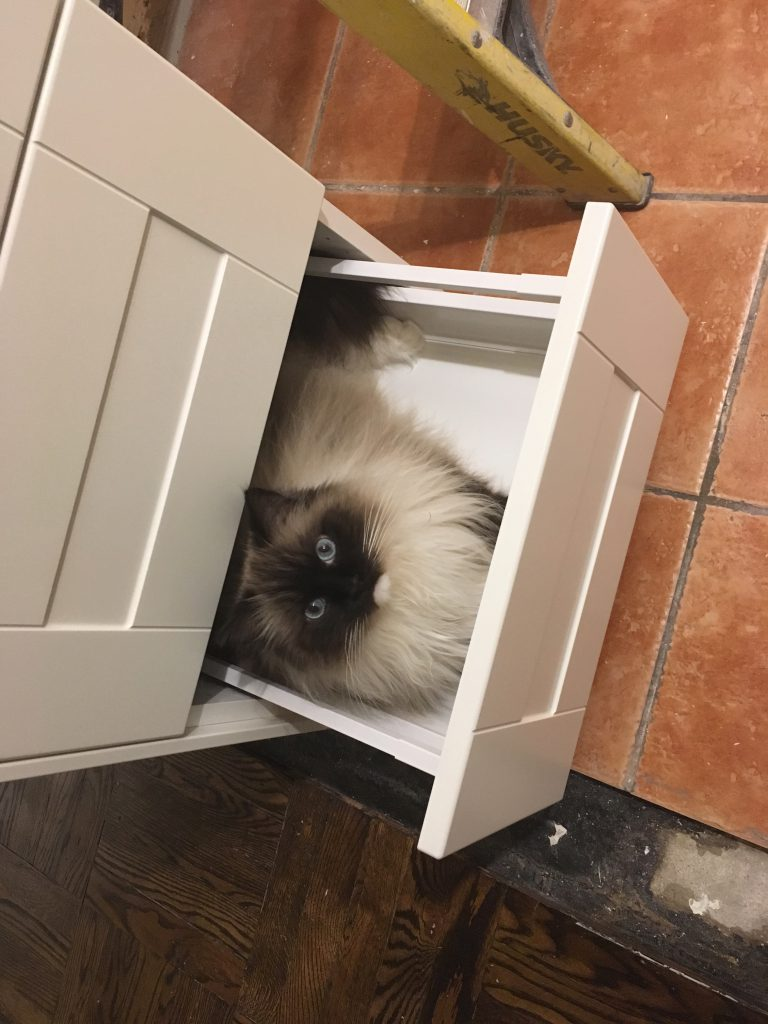 Ragdoll cat drawer